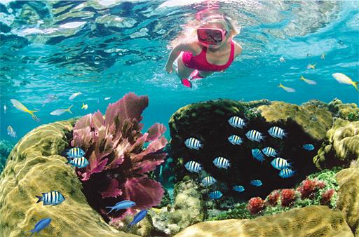 Key Largo Snorkeling Tours To Coral Reefs At John